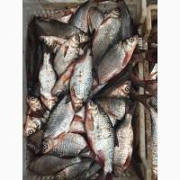 Продам рыбу свежую, свежемороженую