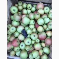 Яблоко на переработку