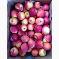 ПРОДАМ яблоко хорошего качества