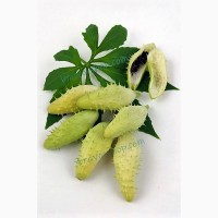 Циклантера (Лат. Cyclanthera), 10 Семян
