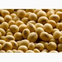 Продам СРОЧНО новый Канадский трансгенный сорт сои под раундап семена насіння сої ГМО