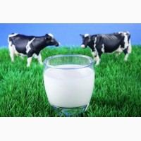 Мини-ферма предлагает молоко