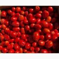 Продам помидор оптом с поля, сорт Пьетро Росса