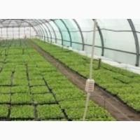 Выращиваем рассаду Арбуза и овощей в кассетах под заказ