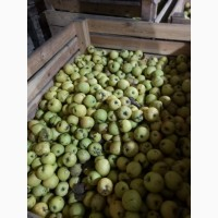Оптовая продажа яблоко 2 сорт