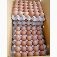 Яйцо куриное оптовые поставки с доставкой по всей территории Украины