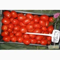 Продам помидор РиоГранде и Рома 2грн!!! Черкасская обл. СРОЧНО!!