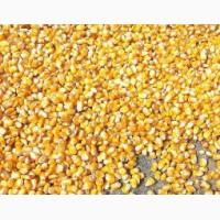 Кукурузу товарную, не классную, некондиционную, просроченный посев.мат, отходы 1 категории
