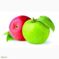 Продам Саженцы плодовых и декоративных деревьев и кустарников