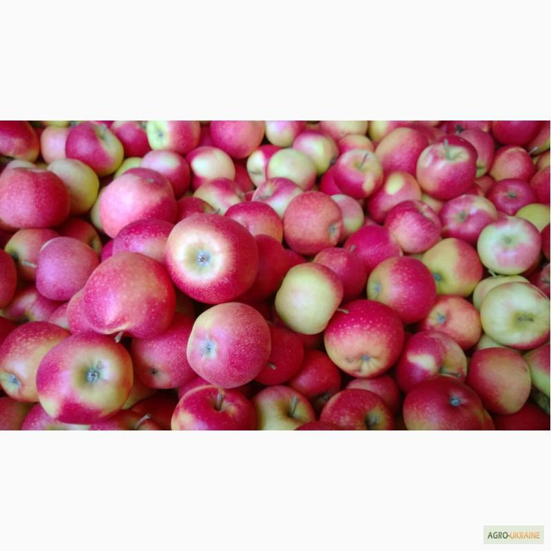 Польские яблоки и груши
