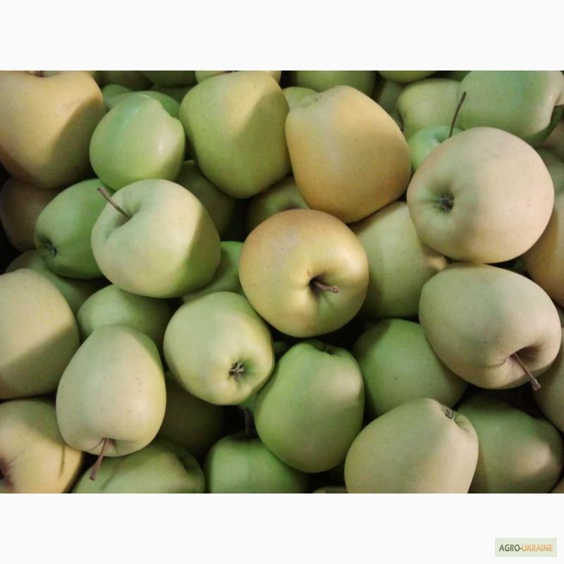Фото 2. Польские яблоки и груши
