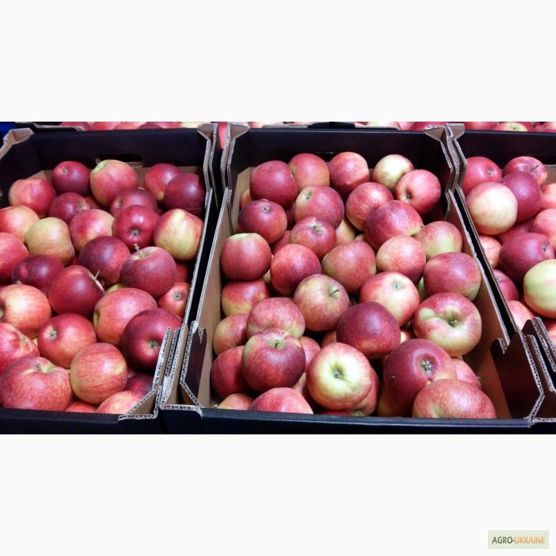 Фото 3. Польские яблоки и груши
