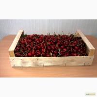 Ящики-лотки для упаковки черешни и персика урожая 2018г.Крым