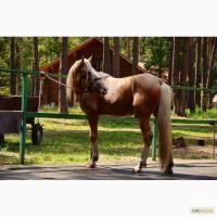 Торийский мерин. лошади