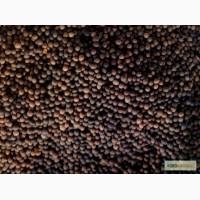 Продаем семена Вика Яровая