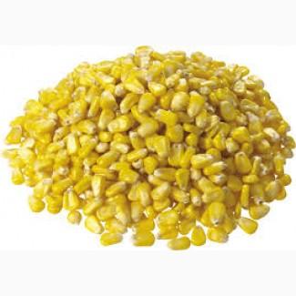 Продам кукурузу на экспорт