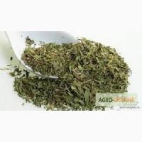 Продаю Стевию (Медовая трава) лист. Безколорийный заменитель сахара. Оптом или в розницу