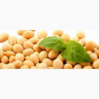 Продам насіння сої
