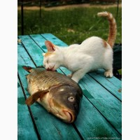 Покупаем рыбные отходы и рыбный неликвид