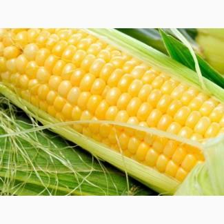 Распродажа 2017года! Семена кукурузы ЛГ Адевей (Adevey)