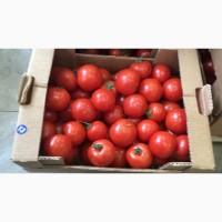 Продам помидоры Киев 25 грн кг с доставкой по киеву купить помидоры киев по оптовым ценам