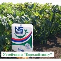 Семена подсолнечника РИМИ (под евро-лайтинг) НОВИ САД (Сербия)