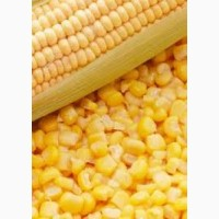 Купим кукурузу в Сумской области. Форма оплаты нал/безнал.Сумская обл