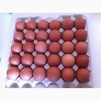 Продам яйцо фермерское куриное