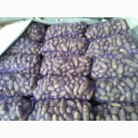 Картофель цена 3.50 грн. ОПТ Гранада, Боло Роса, есть объемы