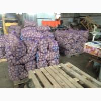 Продам картофель сорт белая росса без дротянки чистая лучшего качества