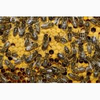 Продам пчело пакет на 4 рамки росплода