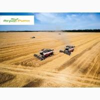 Семена озимой пшеницы Шпаловка, (1-я репродукция ) урожай 2020 г
