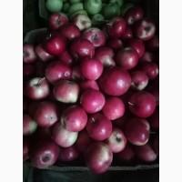 Яблука на повідло