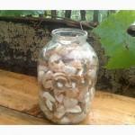 Рассада грибов веселка обыкновенная. Мицелий веселки - гарантия качества, супер-всхожесть