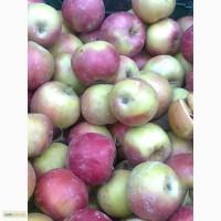 Закупаем яблоко на переработку по высокой цене