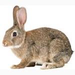 Гранулированный корм, откорм для кроликов от 1, 5 мес тм МаксимуМв Одессе