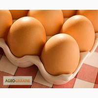 Продам Курячі яйця