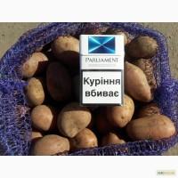 Продам семееа картофеля Ред Леди