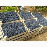 Оптовая продажа винограда