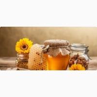 Скупаем мед и пчелопродукты оптом