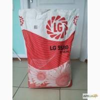 Семена подсолнечника Лимагрейн LG 5580 (ЛГ 5580) Новая Тунка