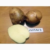 Продам картофель сорт Гранада из песка
