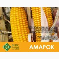Продам кукурузу Амарок 2016р