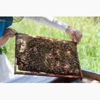 Продам відводки бджіл на 4 рамки (три рамки розплоду, одна покривна) 70 пакетів
