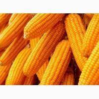 Семена кукурузы ЛГ 30315, Лимагрейн