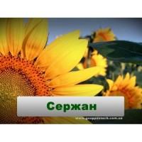 Семена подсолнечника Сержан НОВИ САД (Сербия)