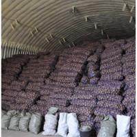 Продам Картофель Гранада цена 3 грн. и Бело Роса 100 тонн