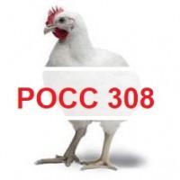РОСС 308. Купить инкубационное яйцо. Бройлер кросс РОСС-308 из Венгрии. Выход от 80%