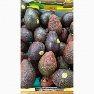 Whole fresh Avocado