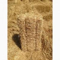 Продам тюки пшеничної соломи